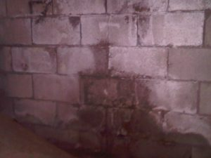 Water saturated cinder-block foundation wall