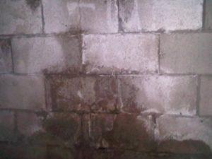 Wet concrete block wall